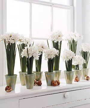 www.pinterest.com paper whites